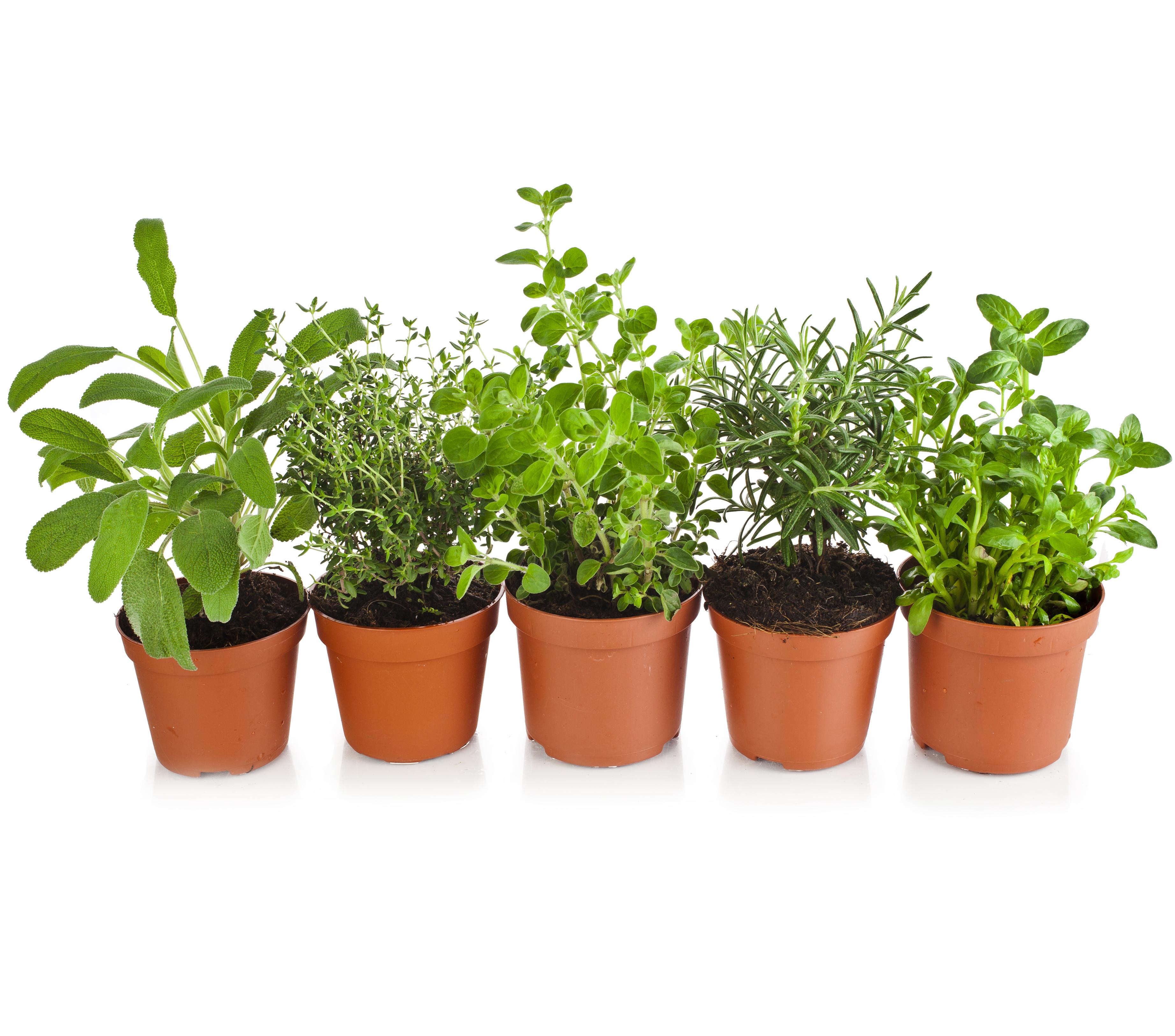 Plantar y sembrar kb jard n plantar plantas arom ticas - Cultivar plantas aromaticas en casa ...