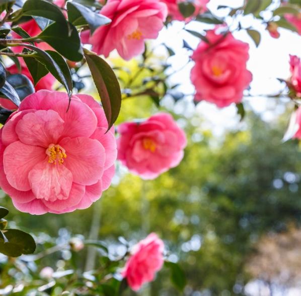 Arbustos de flor consejos de jardiner a para arbustos en - Consejos de jardineria ...