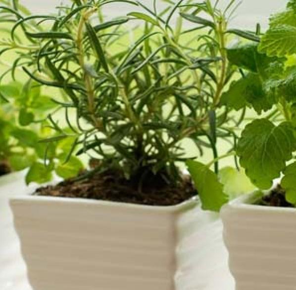 Jardineria interior consejos de jardiner a para plantas - Consejos de jardineria ...