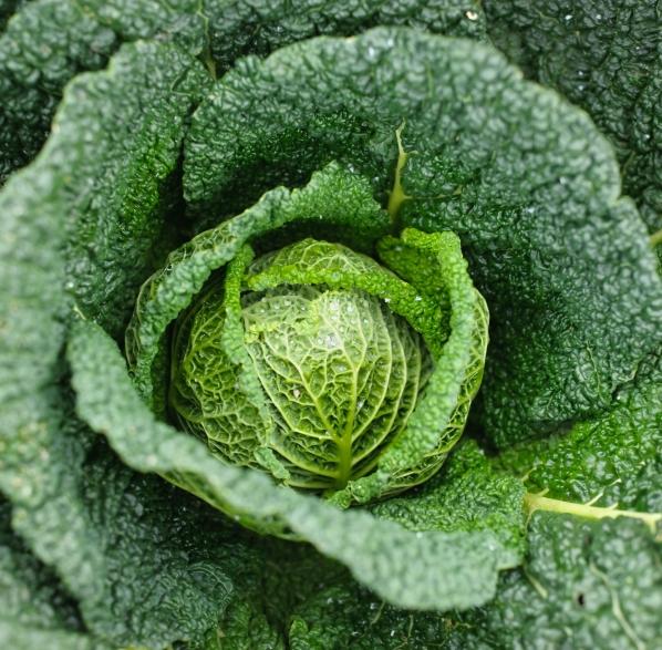 Verduras de hoja consejos de jardiner a kb jardin - Consejos de jardineria ...