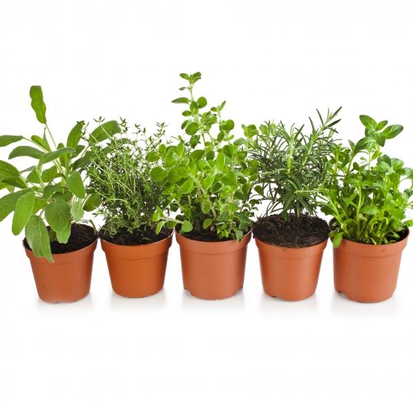 Plantas arom ticas consejos de jardiner a kb jardin for Jardinera plantas aromaticas