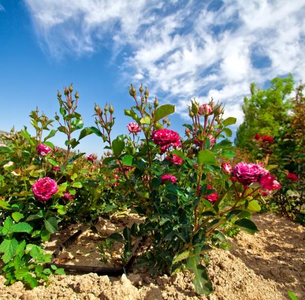 Consejos de jardineria consejos de jardinera podar los - Jardineria villanueva valencia ...