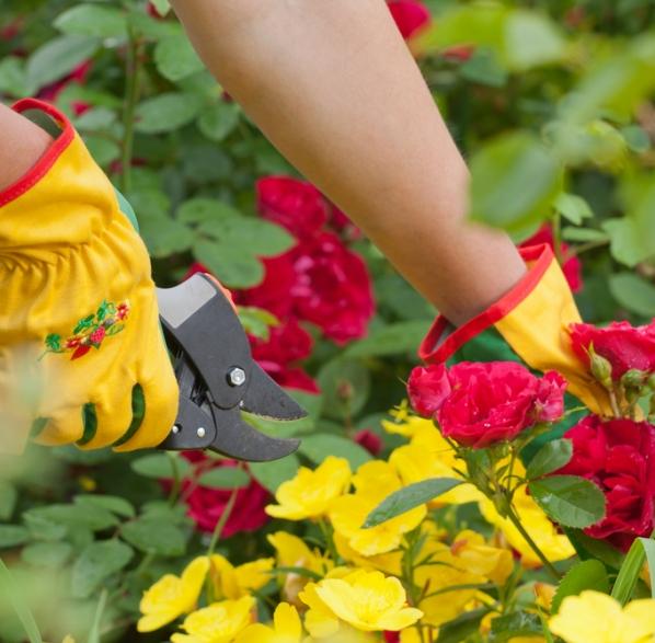 Rosales consejos de jardiner a kb jardin - Consejos de jardineria ...
