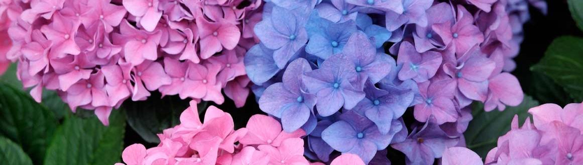 Plantar Y Mantener Arbustos De Flor Kb Jardin Consejos Sobre - Arbustos-de-flor
